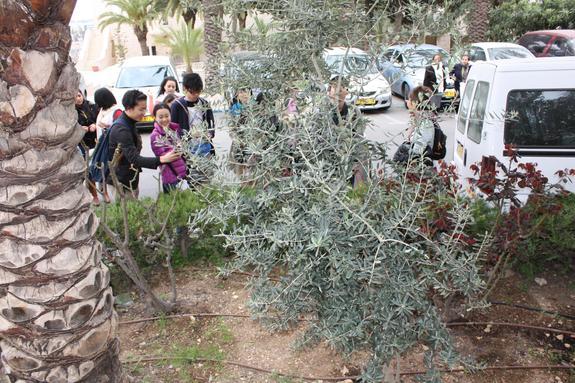 2009年、エルサレムに記念植樹したオリーブの木